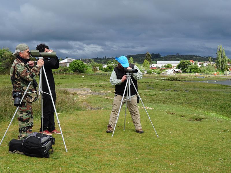 Migratory shorebirds Monitoring