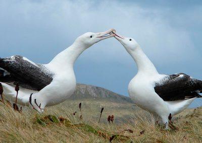 Marine monitoring program in Patagonia National Parks