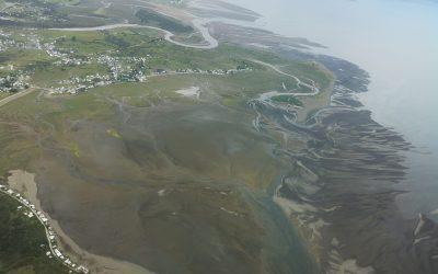 Proyecto busca resguardar aves playeras migratorias en humedales de Chamiza; Iniciativa es ejecutada de manera conjunta por la Fundación Conservación Marina y Red de Observadores de Aves y Vida Silvestre de Chile.